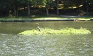 Ile flottante